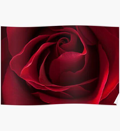 Dark Red Rose Poster