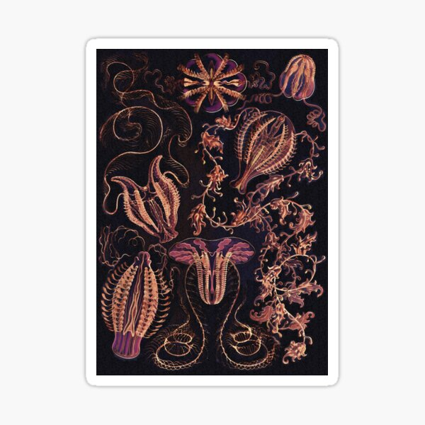 Ctenophorae and Comb Jelly in Harvest Colors  Sticker