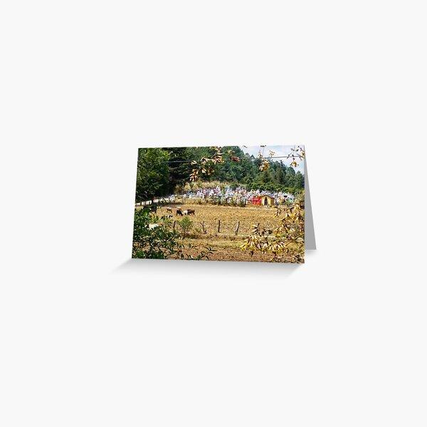 Condolences - cemetery with cows, Michoacan, Mexico Greeting Card