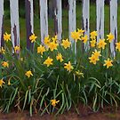 Garden Fence and Daffodils by Floyd Hopper