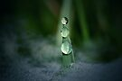 Raindrops in the Mist by Renee Dawson
