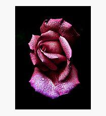 Morning Rose Photographic Print