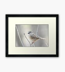 Sparrow Framed Print