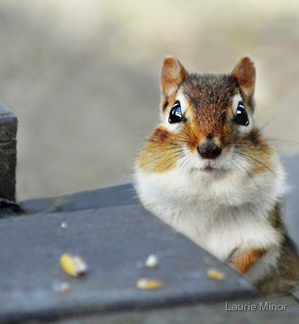 Bright eyed and bushy tailed by Laurie Minor
