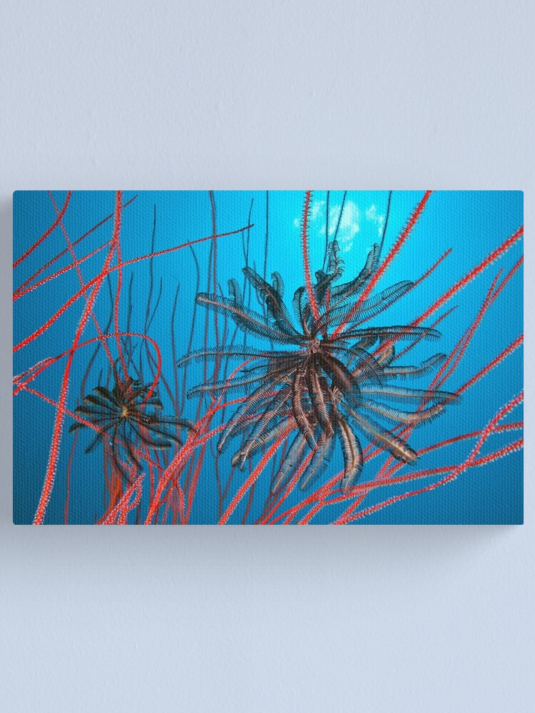 Alternate view of Feathers and whips Canvas Print