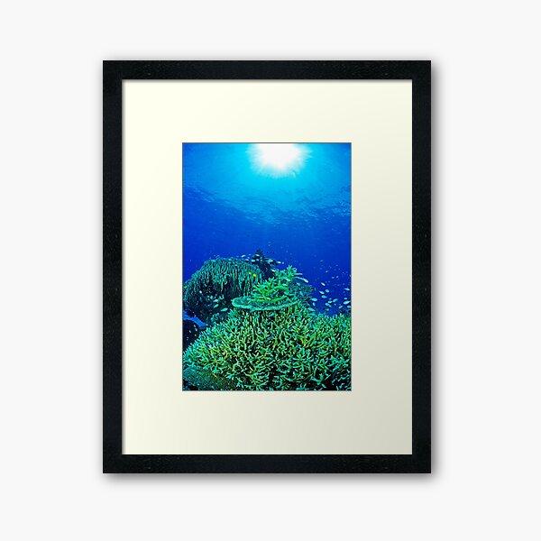 Coral reef scene Framed Art Print