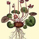 Cyclamen Flower Botanical by Zehda