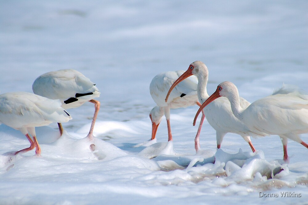 Ibis in Snow? by Donna Wilkins