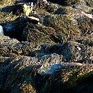 'Textures of Maine - Exposed Kelp' by Scott Bricker