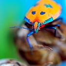 Bright Beetle by Renee Hubbard Fine Art Photography