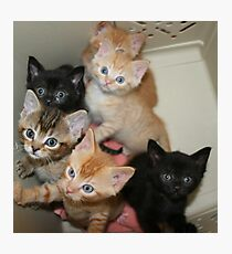 Six hungry kittens Photographic Print