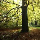 Light in a Tree by ienemien