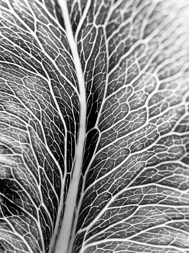 Leaf Pattern by gardenpictures