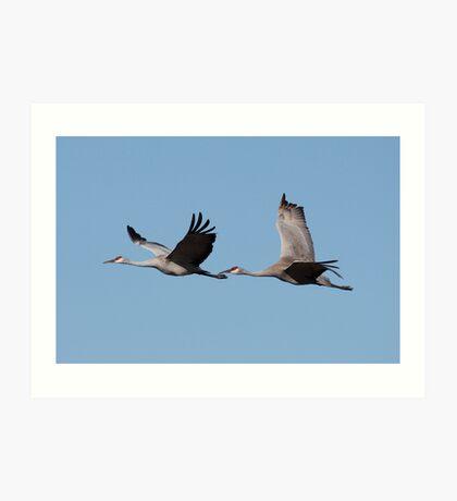Sandhill Crains In Flight Art Print