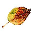 Autumn leaf 1 by ColourCottage