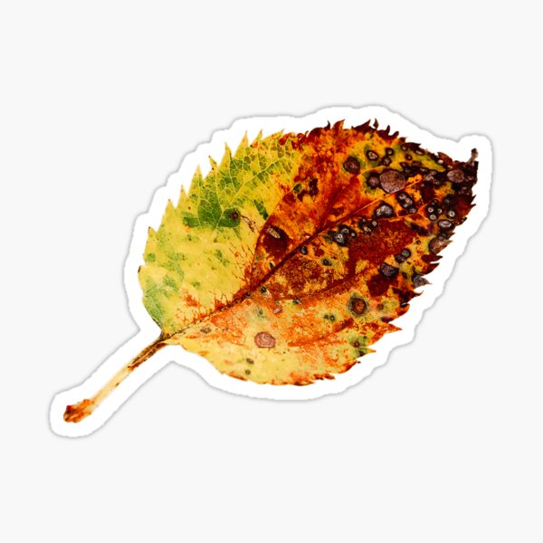 Autumn leaf 1 Sticker