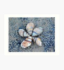 Seashell Flower Art Print