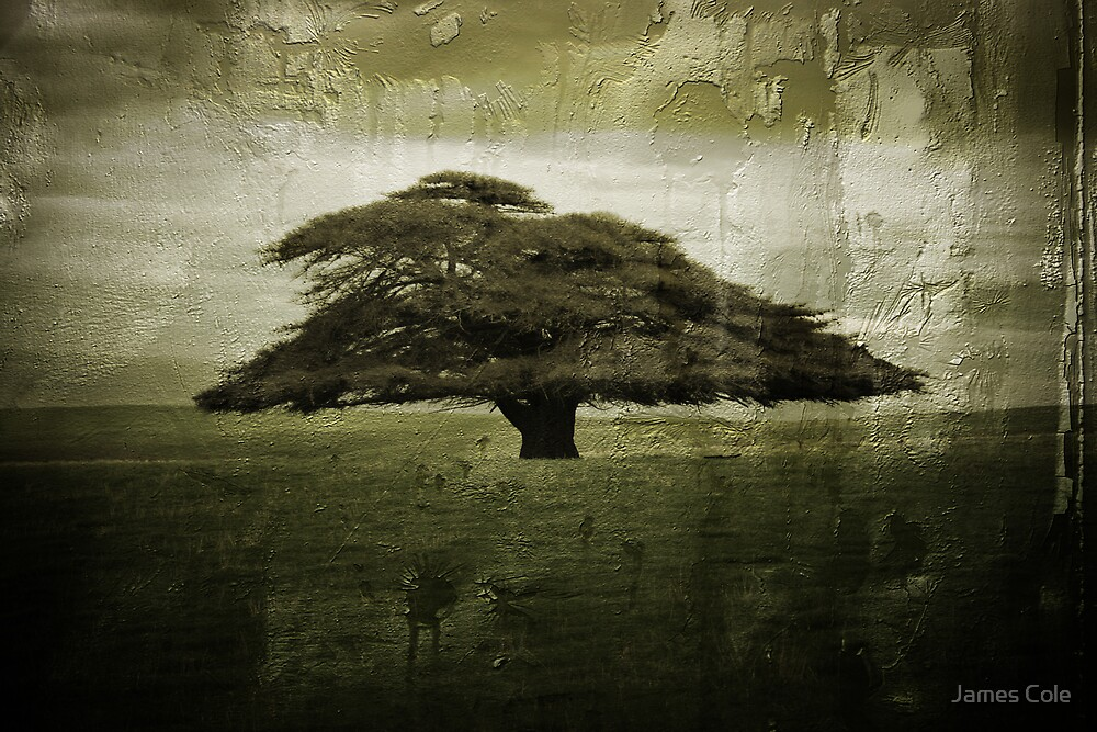 Desolate Tree by James Cole