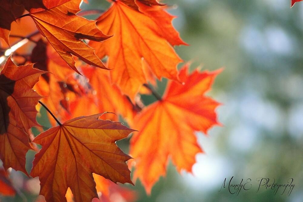 Autumn Leaves #1 by Br0wnEyedQueen