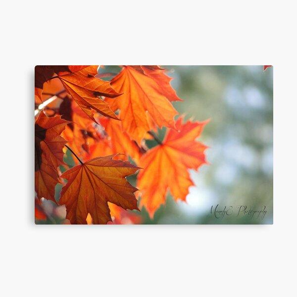 Autumn Leaves #1 Metal Print