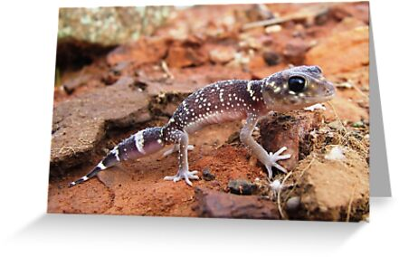 thick-tailed gecko by jeroenvanveen