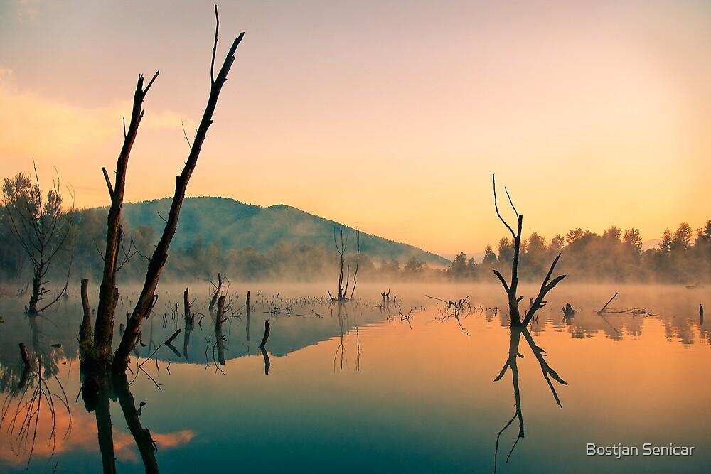Morning by Bostjan Senicar
