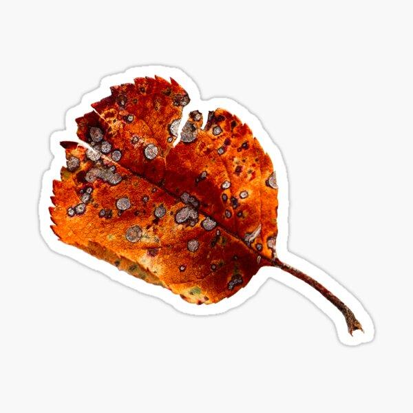 Autumn Leaf 2 Sticker