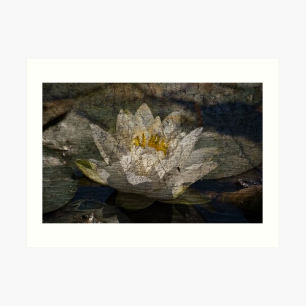 Textured Pond Lily Art Print