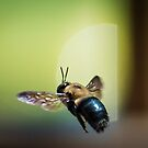 Bee in Flight by EthanQuin