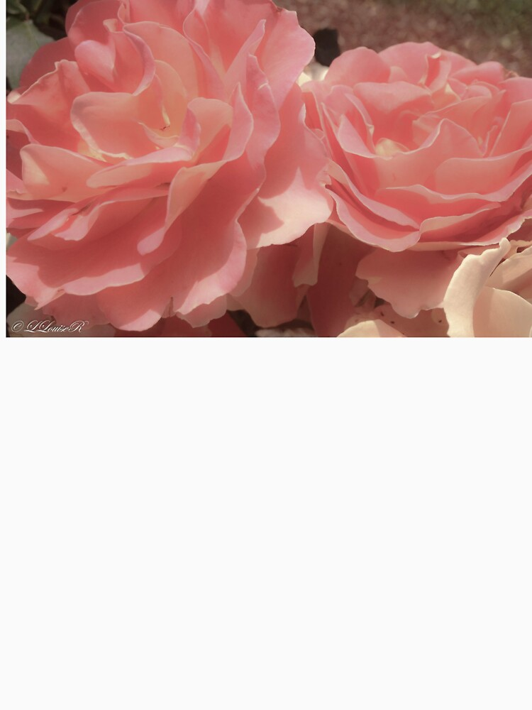 Antique Rose by laurenlouiser