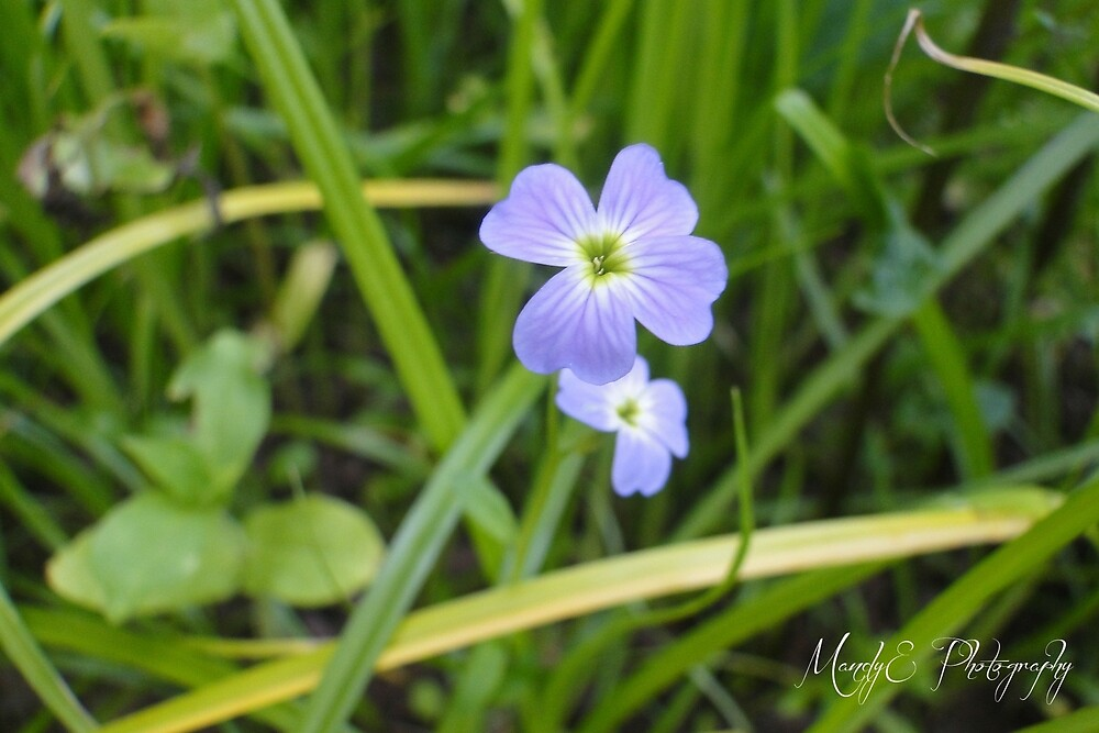 Tiny Blue Wildflower by Br0wnEyedQueen