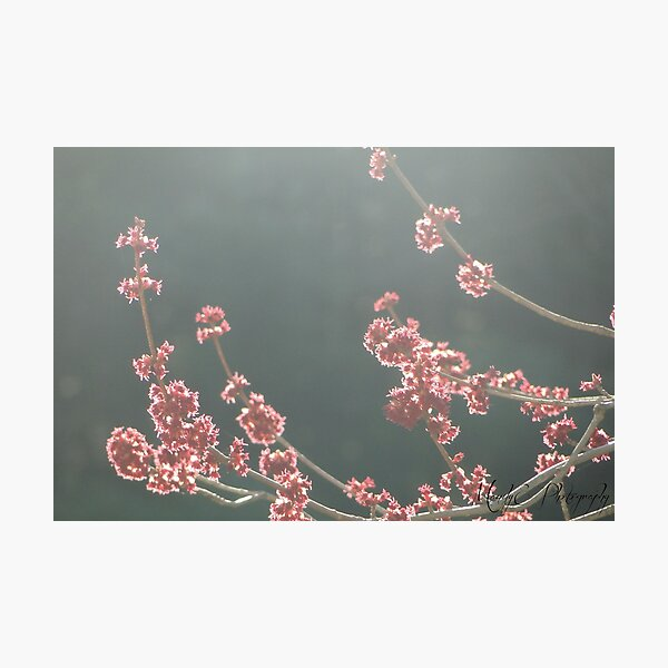 Fairy Spring #2 Photographic Print