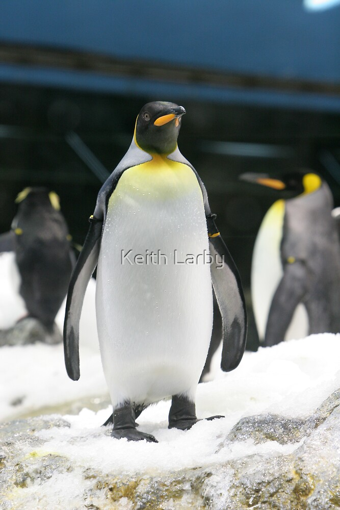 Penguin in Loro Park Tenerife by Keith Larby