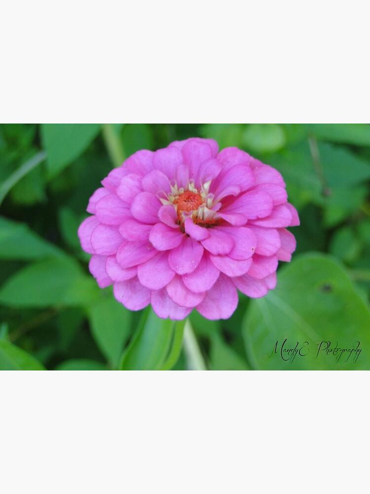 Pink Wildflower #3 by Br0wnEyedQueen
