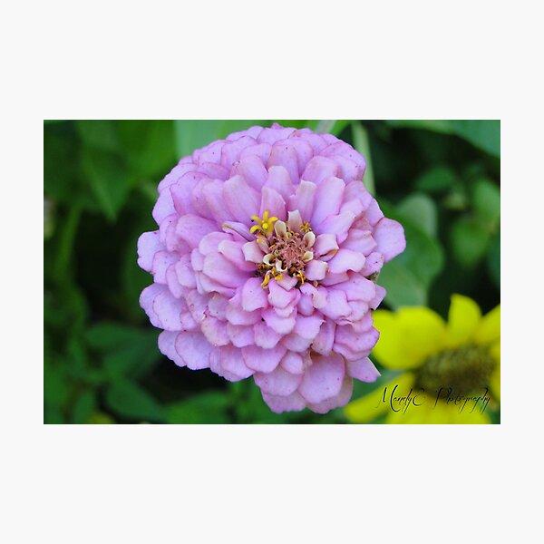 Pink Wildflower #4 Photographic Print