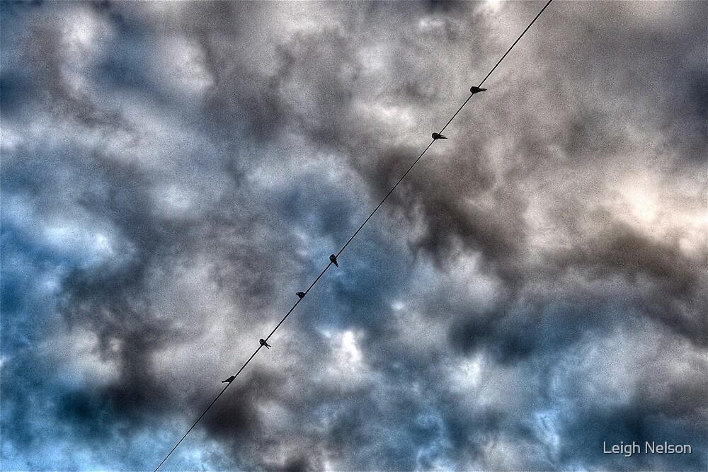 Birds on a wire- Avalon, Sydney, Australia. by Leigh Nelson