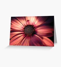 Stunning by Night Greeting Card
