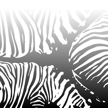 Zebra Camo Pattern - Black and White by Quooki