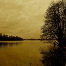 Frensham Ponds by shakey123