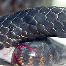 Birth of a Tiger snake by Thow's Photography