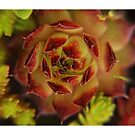 Springtime Succulents by Solomon Walker