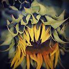 Partial to the Sun  by Karen E Camilleri