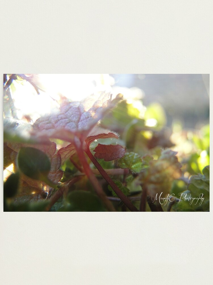 Alternate view of Soft Clovers #5 Photographic Print