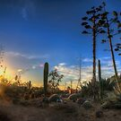 Cactus Country by djzontheball