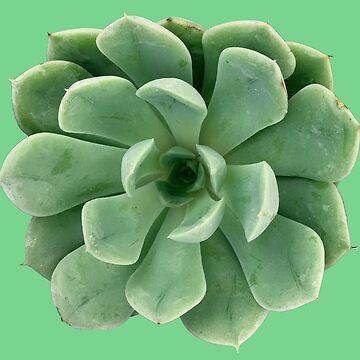 Elegant Echeveria Succulent Plant by juniperdesign