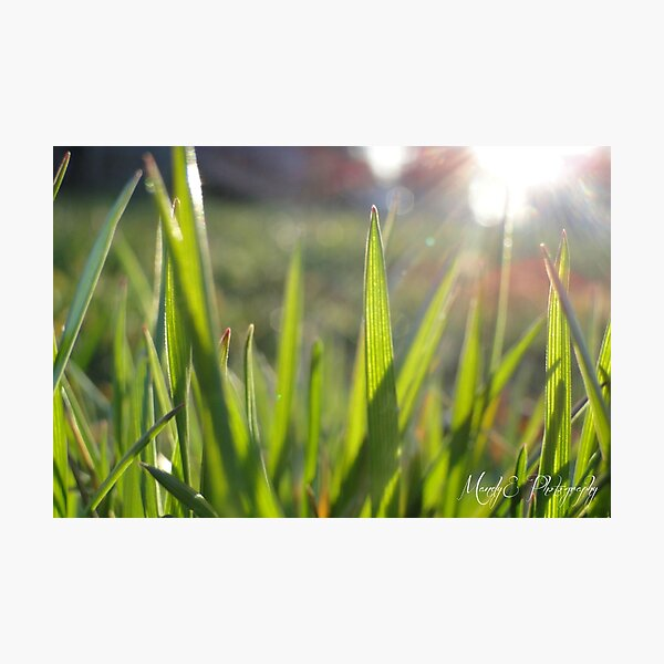 Grass in Sunlight #3 Photographic Print