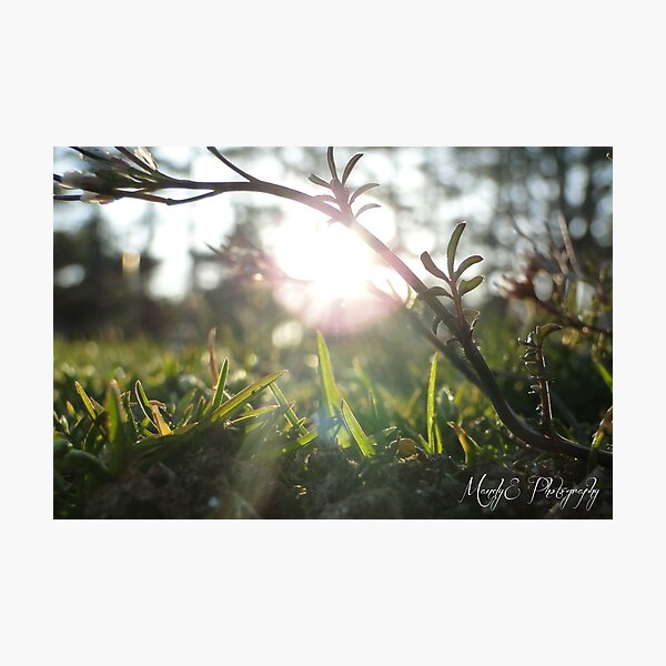 Grass in Sunlight #5 Photographic Print