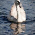 Ethereal Swan by kernuak
