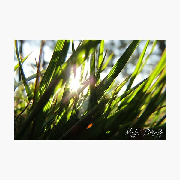 Grass in Sunlight #6 Photographic Print