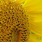 Sunflower #2 by Br0wnEyedQueen